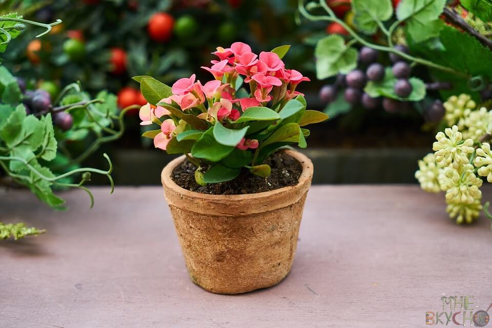 cvetok-v-gorshke